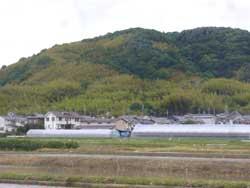 takebayashi-sinsyoku.jpg