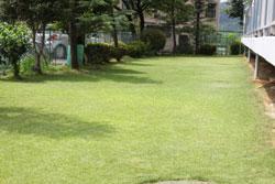 団地 芝生